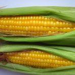 清煮带皮嫩玉米的做法