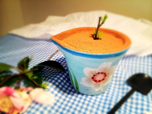 提拉米苏盆栽的做法